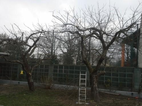 <?= Obrezovanje sadnega drevja; ?>