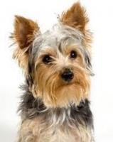 Pasji salon, striženje psov, Jesenice logo image