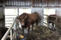 Reja plemenske živine - Kmetija Rajhenav, Kočevje