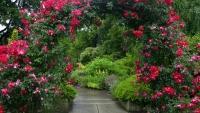 Palma vrtnarstvo urejanje okolice, Obala