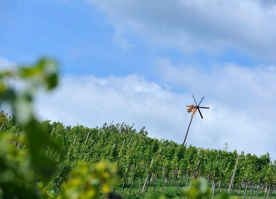 Sagmeister - Hiša pesmi in vina gallery photo no.22