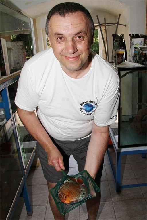 Ribe za akvarij - Diskus gojilnica, Škofja Loka gallery photo no.14