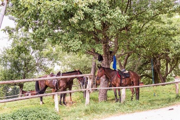 Izletniška kmetija Petre, Vitanje, Celje gallery photo no.0