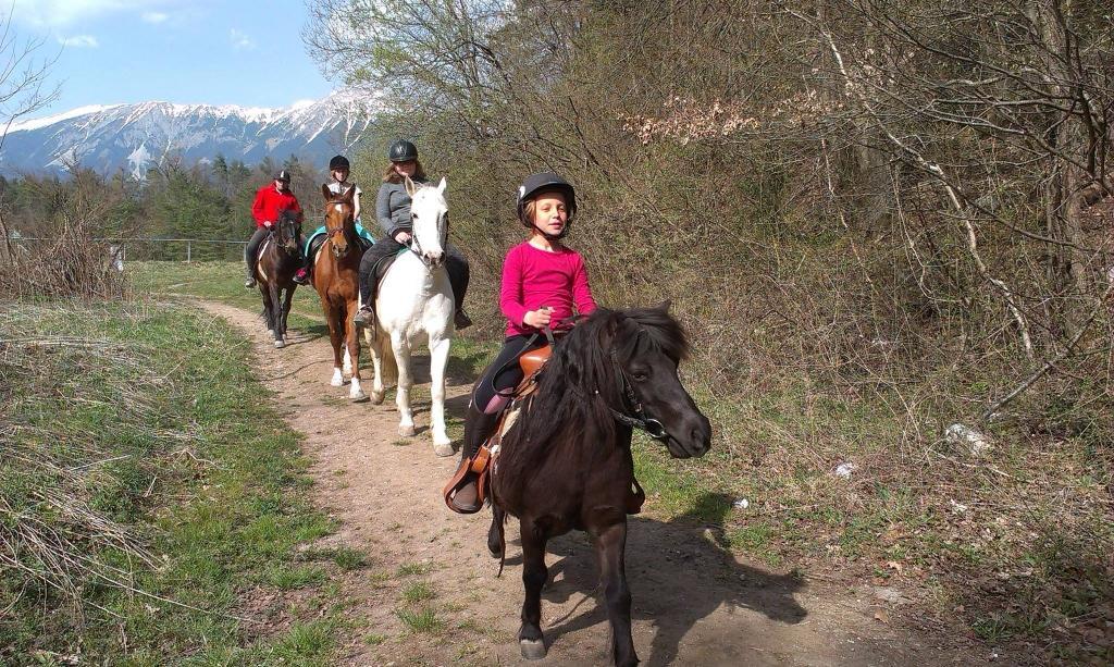Konjeniški klub Lesce - Bled gallery photo no.14