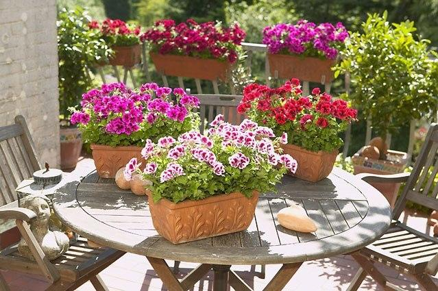 Vrtnarstvo Moretini, vrtni center, Koper gallery photo no.1