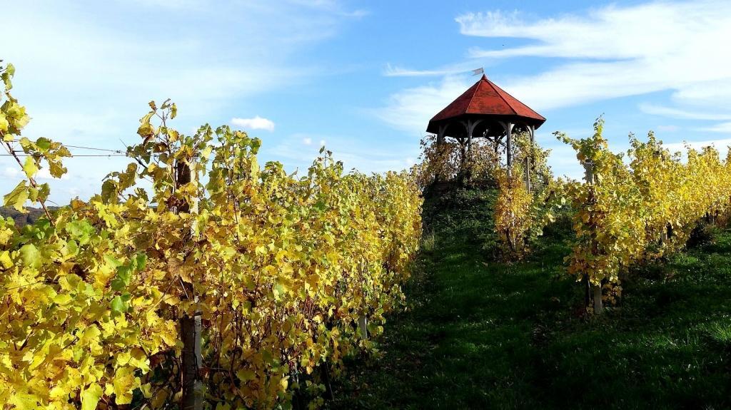 Vinogradništvo Druzovič, domače vino, Vitomarci gallery photo no.1