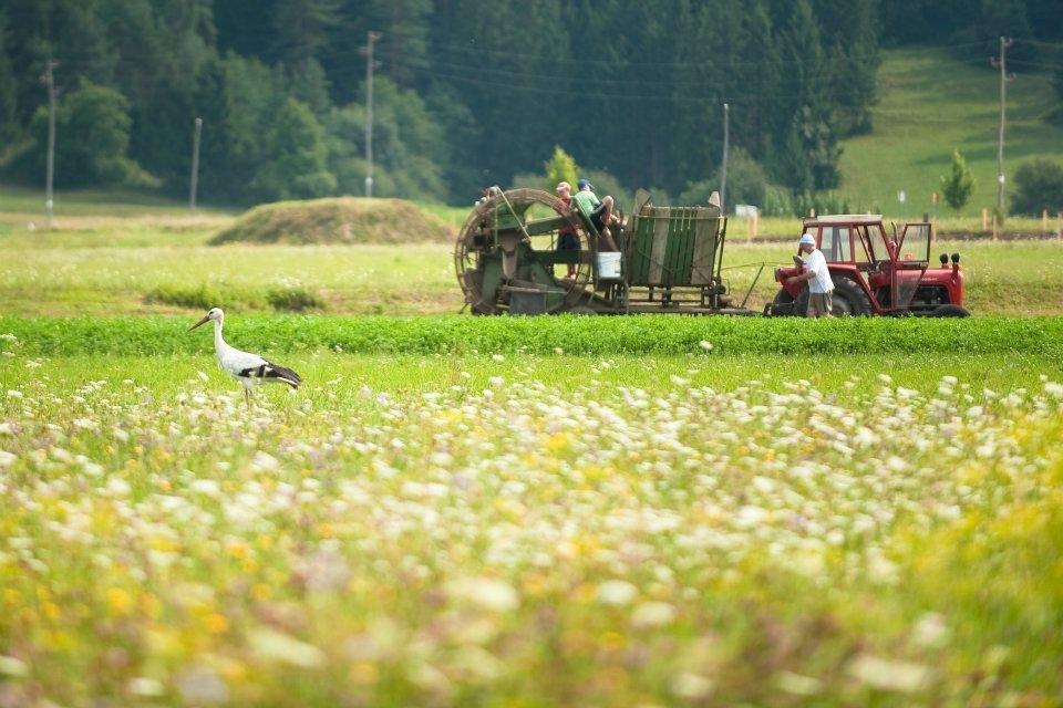 Kmetija Knavs, Bloke gallery photo no.13