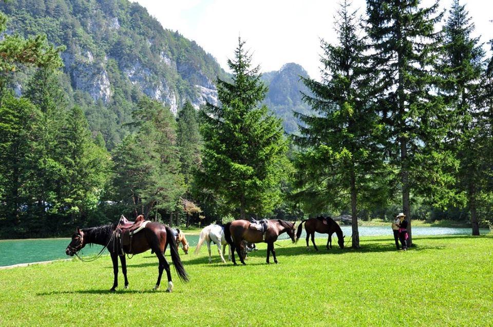Konjeniški klub Lesce - Bled gallery photo no.8