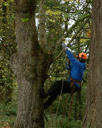 Obrezovanje dreves, Igor Cerovšek s.p., Ljubljana gallery photo no.7