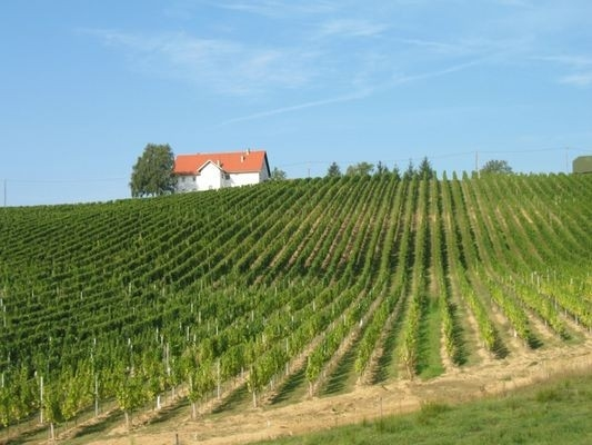 Vinogradništvo Druzovič, domače vino, Vitomarci gallery photo no.0