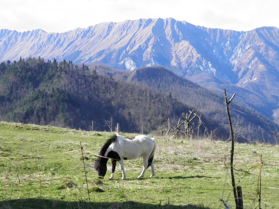 Turistična eko kmetija, kamp prenočišča Robidišče, Kobarid gallery photo no.2