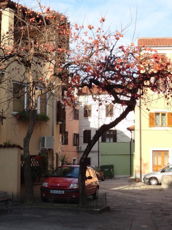 Hostel Alieti, Izola gallery photo no.11
