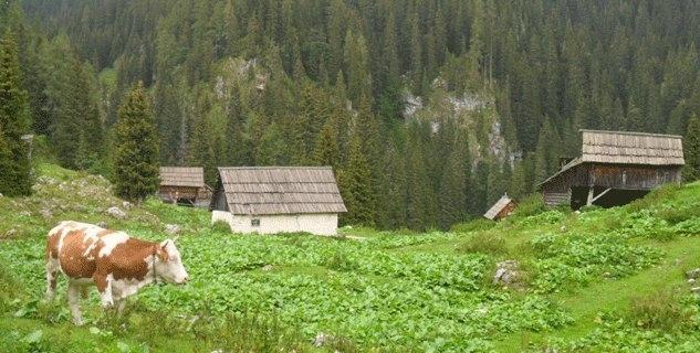 Turistična kmetija Pri Miklavu, Bohinj gallery photo no.8