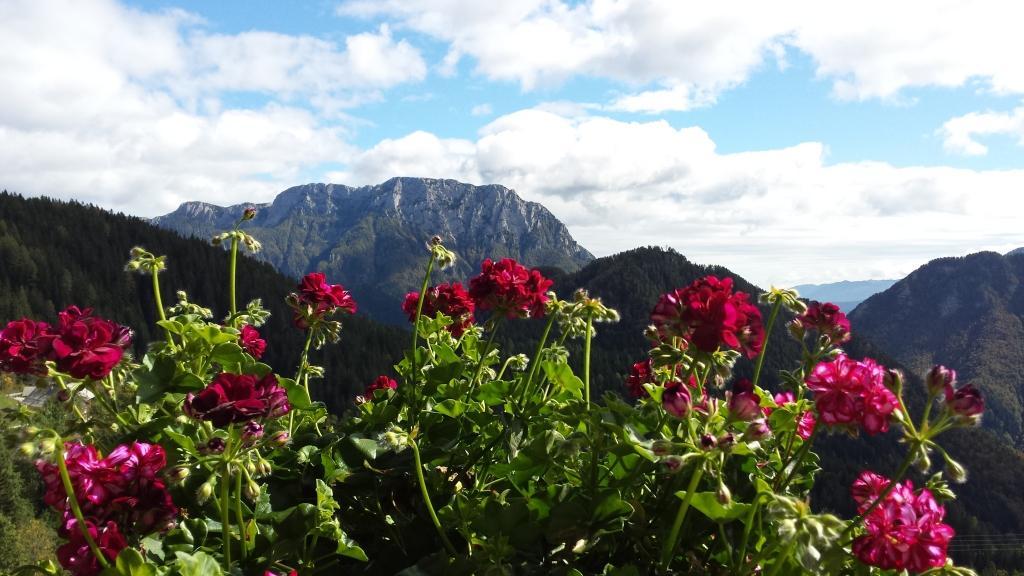 Turistična kmetija Rogar, Solčava gallery photo no.6