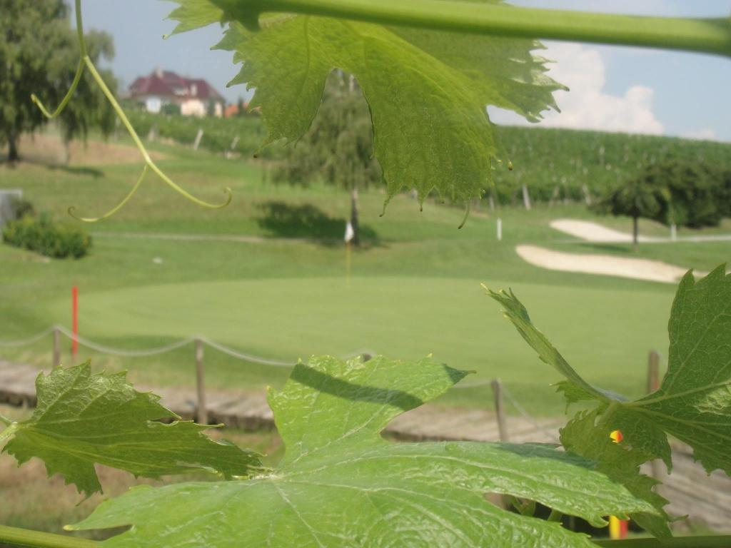 Golf turnir Zlati Grič gallery photo no.12