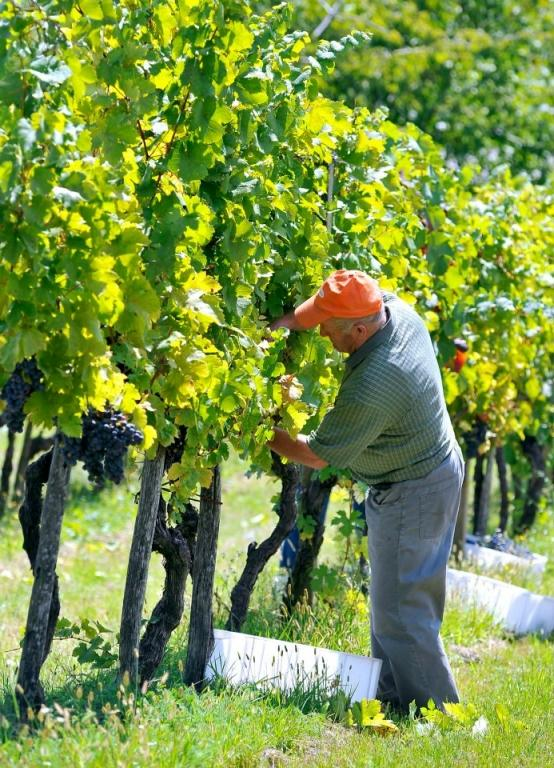 Sagmeister - Hiša pesmi in vina gallery photo no.21