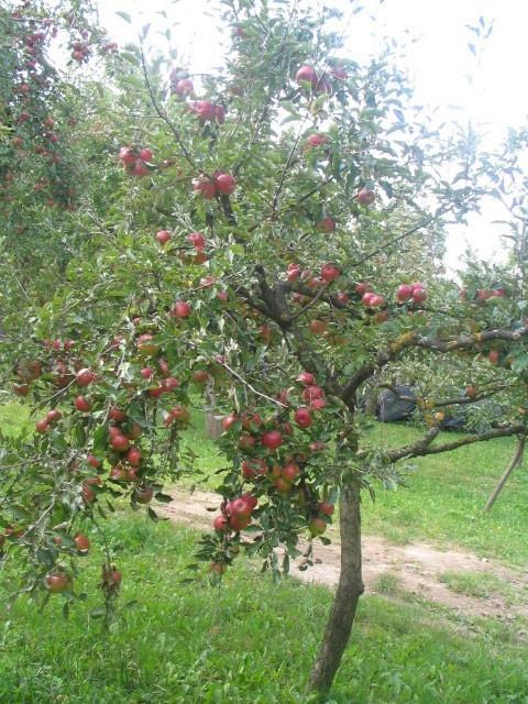 Turistična kmetija Logar, Kras gallery photo no.5