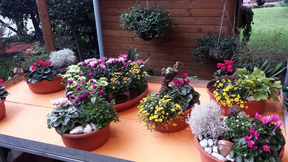 Vrtnarstvo Moretini, vrtni center, Koper gallery photo no.9