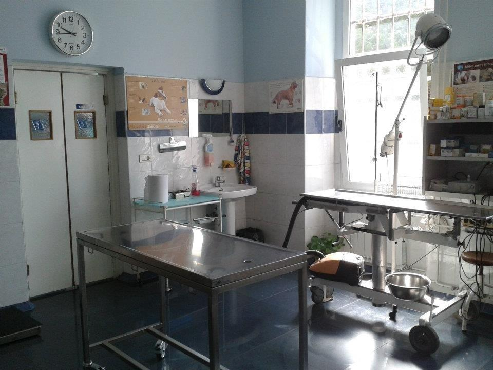 Veterinarska bolnica Vipava gallery photo no.3