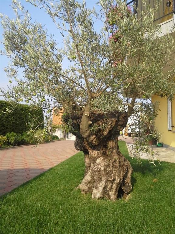 Palma vrtnarstvo urejanje okolice, Obala gallery photo no.8