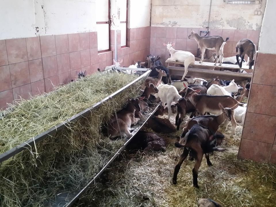 Družinska kmetija Štemberger, gozdne gobe, meso eko jagnjetinje, Ilirska Bistrica gallery photo no.5
