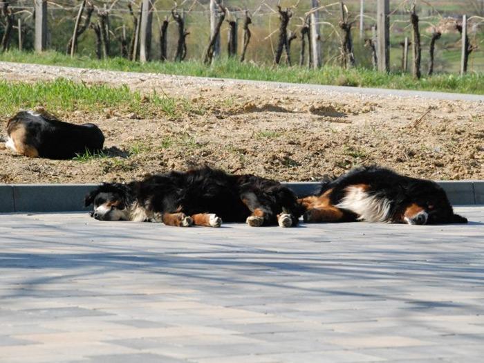 Turistična kmetija Smodiš, Prekmurje gallery photo no.2
