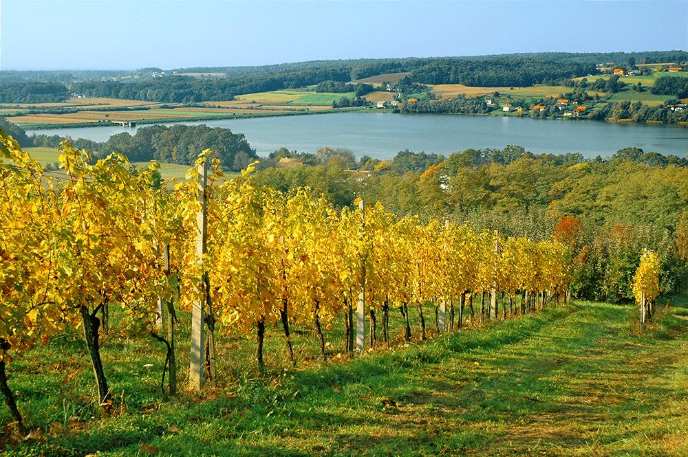 Turistična kmetija Ferencovi, Cankova, Prekmurje gallery photo no.6