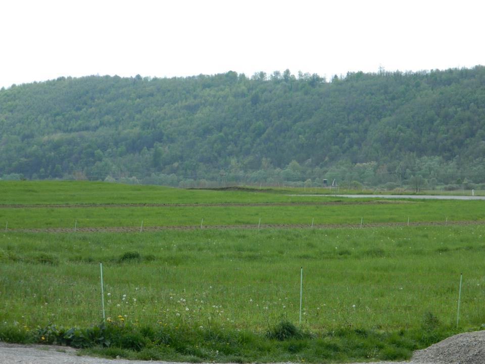 Družinska kmetija Štemberger, gozdne gobe, meso eko jagnjetinje, Ilirska Bistrica gallery photo no.3
