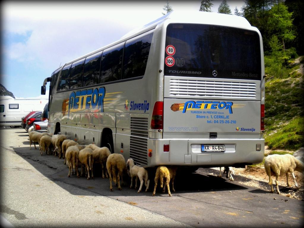 Avtobusni prevozi in potovanja METEOR CERKLJE gallery photo no.7