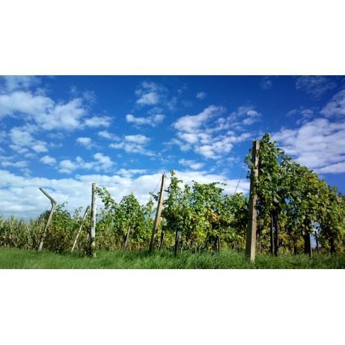Bučno olje, konopljino olje, orehovo olje Prekmurje gallery photo no.5