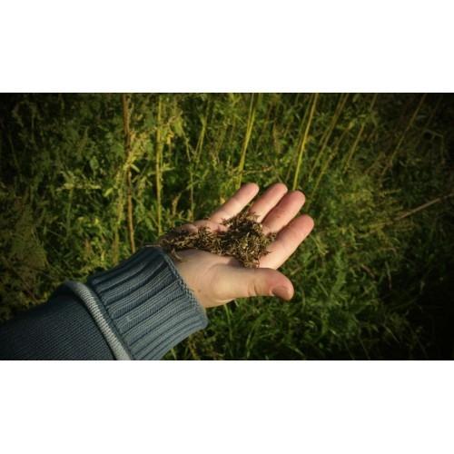 Bučno olje, konopljino olje, orehovo olje Prekmurje gallery photo no.11