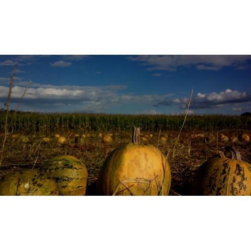 Bučno olje, konopljino olje, orehovo olje Prekmurje gallery photo no.21