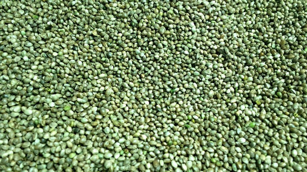Bučno olje, konopljino olje, orehovo olje Prekmurje gallery photo no.26