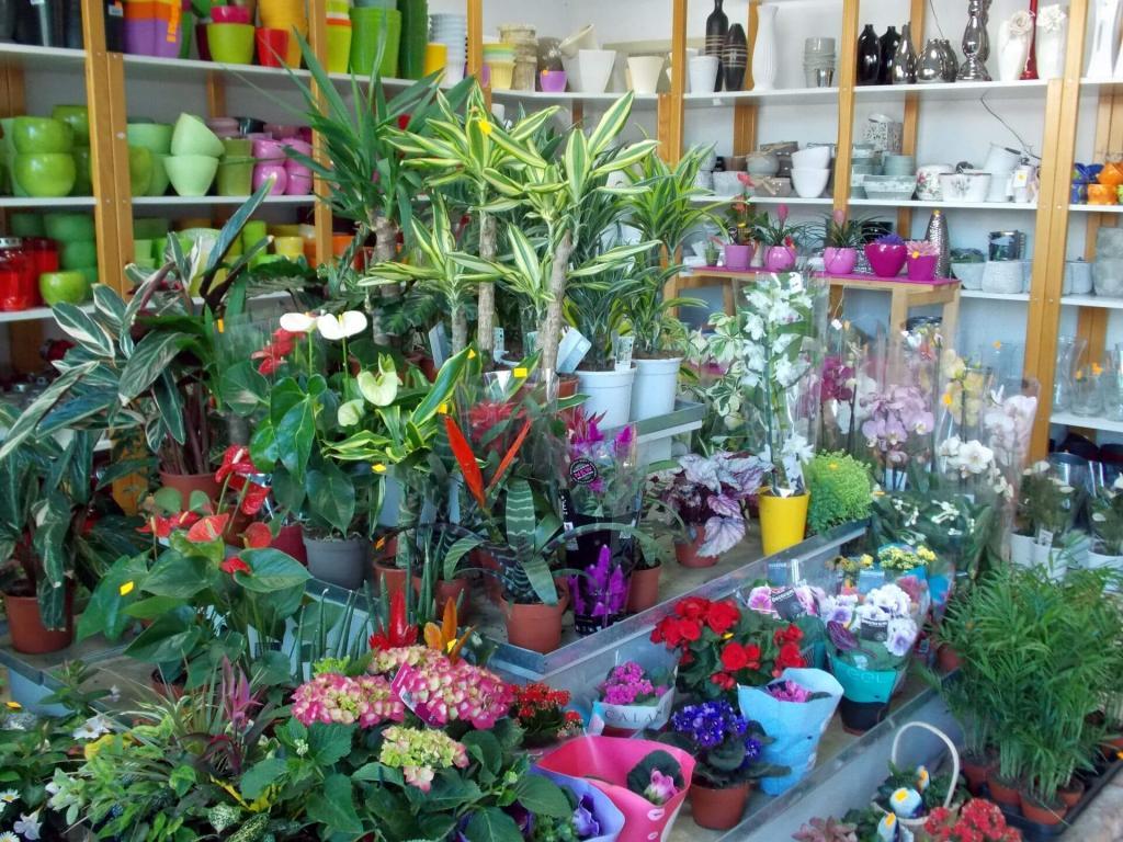 Cvetje in steklo, Apartmaji na otoku Krk, angus govedo, izdelki iz konoplje, Kirn gallery photo no.8