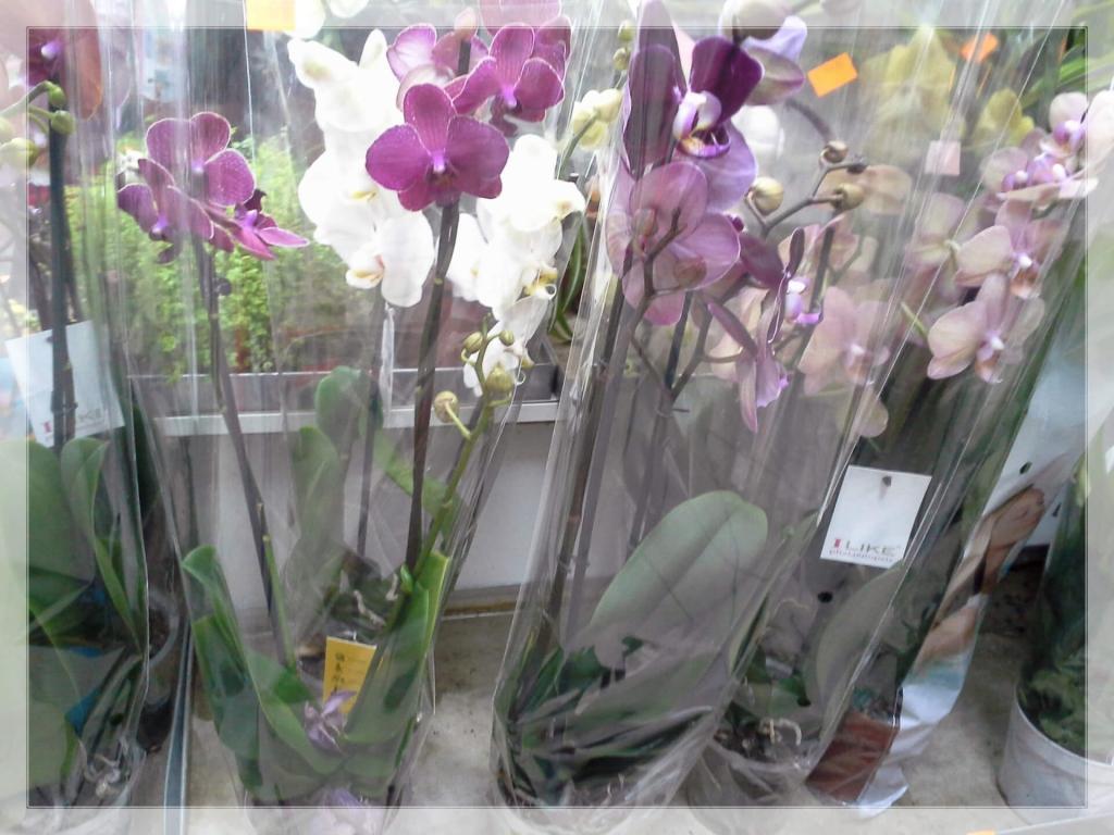 Cvetje in steklo, Apartmaji na otoku Krk, angus govedo, izdelki iz konoplje, Kirn gallery photo no.12