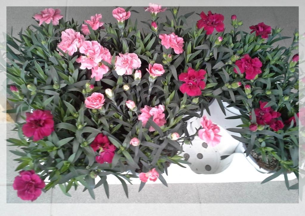 Cvetje in steklo, Apartmaji na otoku Krk, angus govedo, izdelki iz konoplje, Kirn gallery photo no.14