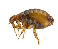 Dezinfekcija prostorov, deratizacija miši, podgan, dezinsekcija mrčesa, ščurkov, faraonskih mravelj gallery photo no.5