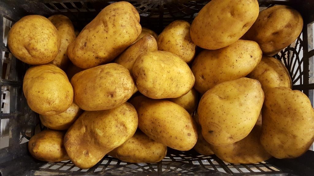 Dobava, dostava, predelava krompirja gallery photo no.3