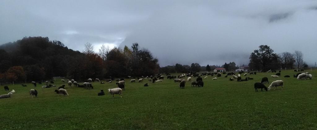 Ekološki bovški ovčji sir - Sirarstvo Ostan Bovec gallery photo no.15