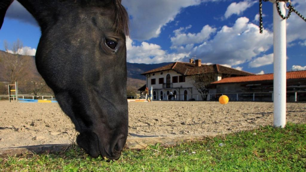 Gostilna in restavracija Mandrija, Nova Gorica gallery photo no.5