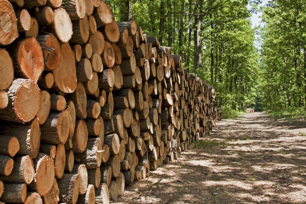 Gozdne storitve, nizke gradnje, Kamnik gallery photo no.3
