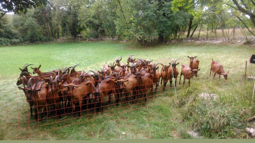Izdelki iz kozjega mleka, Kmetija Žerjal, Kras gallery photo no.2