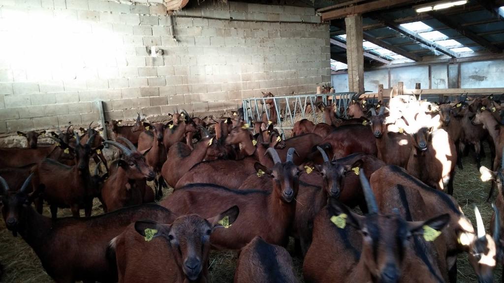 Izdelki iz kozjega mleka, Kmetija Žerjal, Kras gallery photo no.8