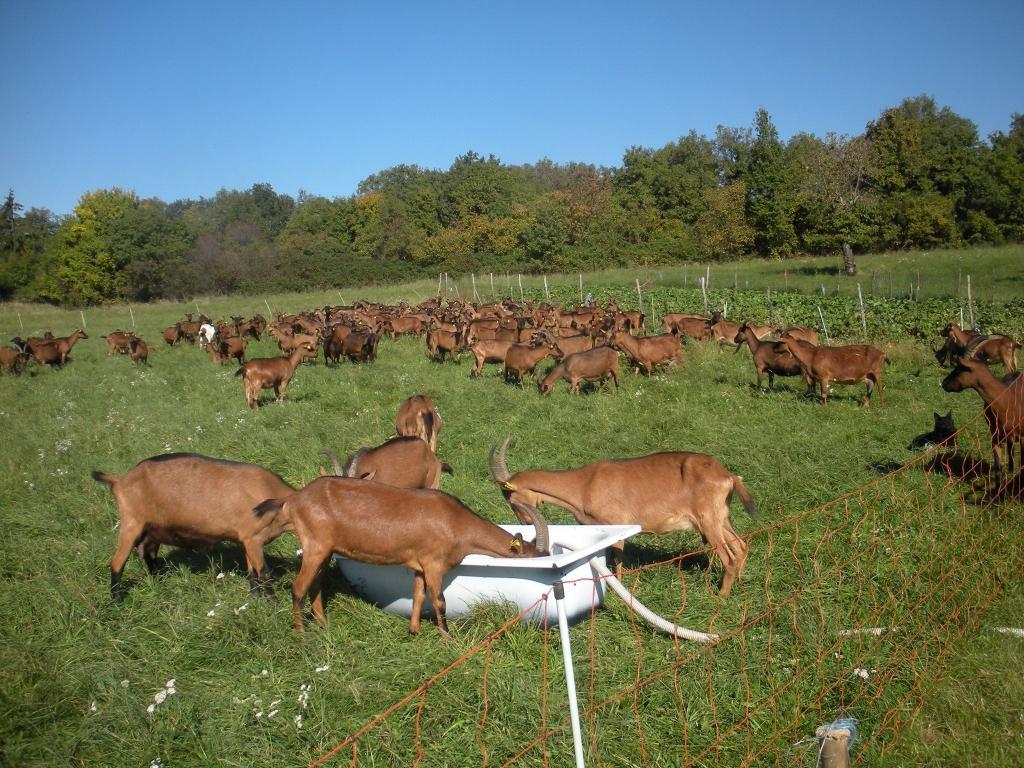 Izdelki iz kozjega mleka, Kmetija Žerjal, Kras gallery photo no.14
