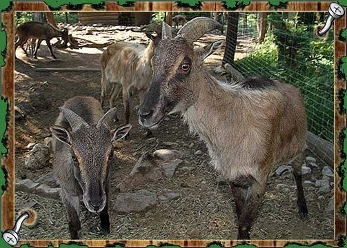 Naravni živalski vrt - ZOO Park ROŽMAN, Vrzdenec - Horjul gallery photo no.6