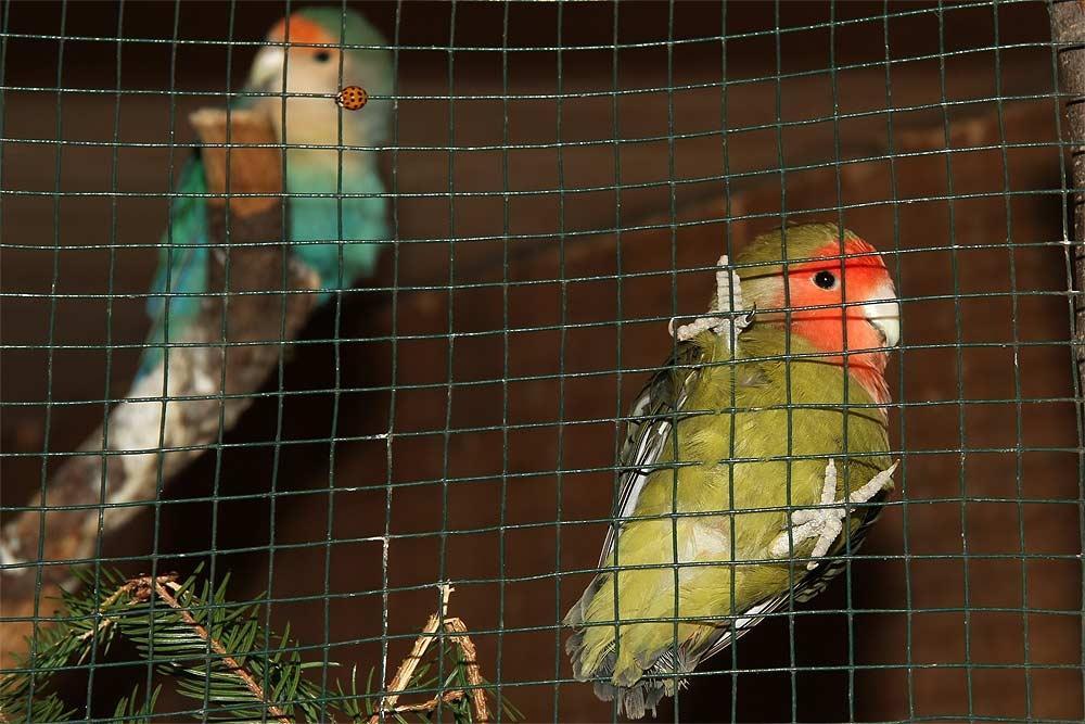 Naravni živalski vrt - ZOO Park ROŽMAN, Vrzdenec - Horjul gallery photo no.15