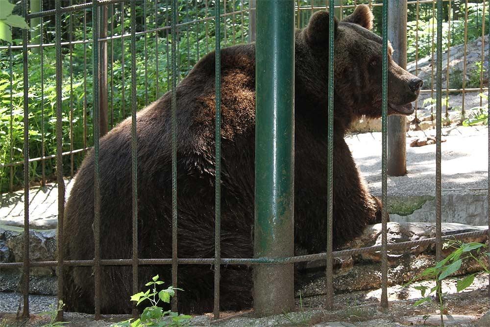 Naravni živalski vrt - ZOO Park ROŽMAN, Vrzdenec - Horjul gallery photo no.18