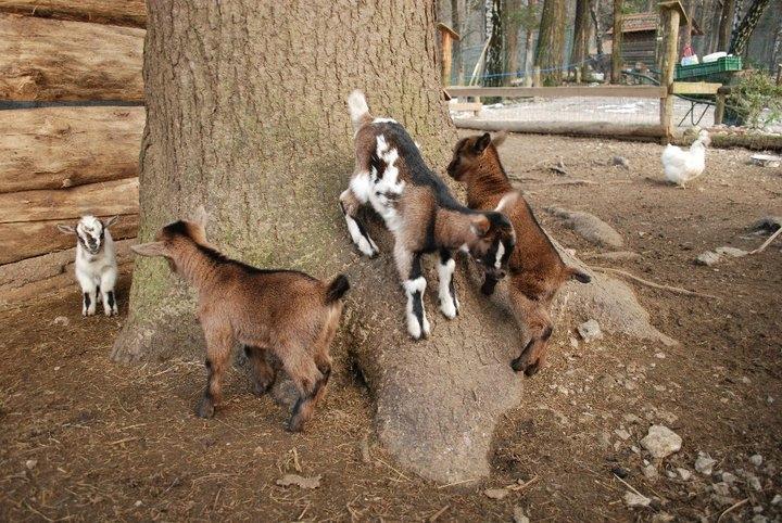 Naravni živalski vrt - ZOO Park ROŽMAN, Vrzdenec - Horjul gallery photo no.32