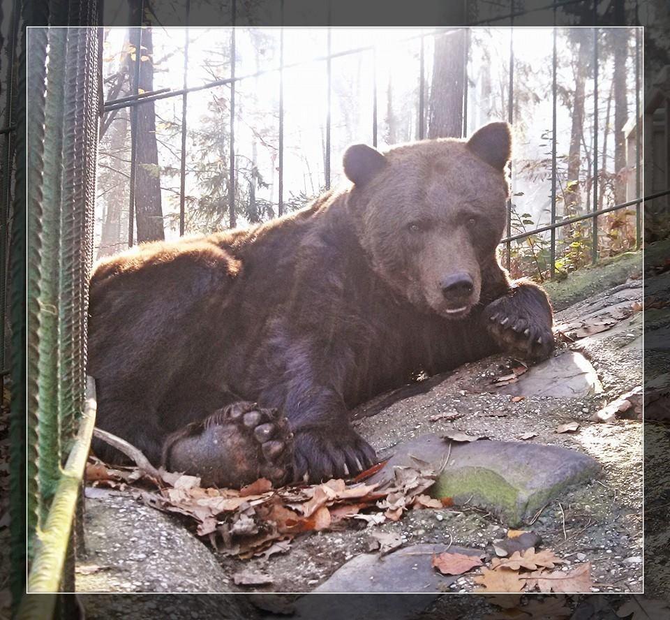 Naravni živalski vrt - ZOO Park ROŽMAN, Vrzdenec - Horjul gallery photo no.29