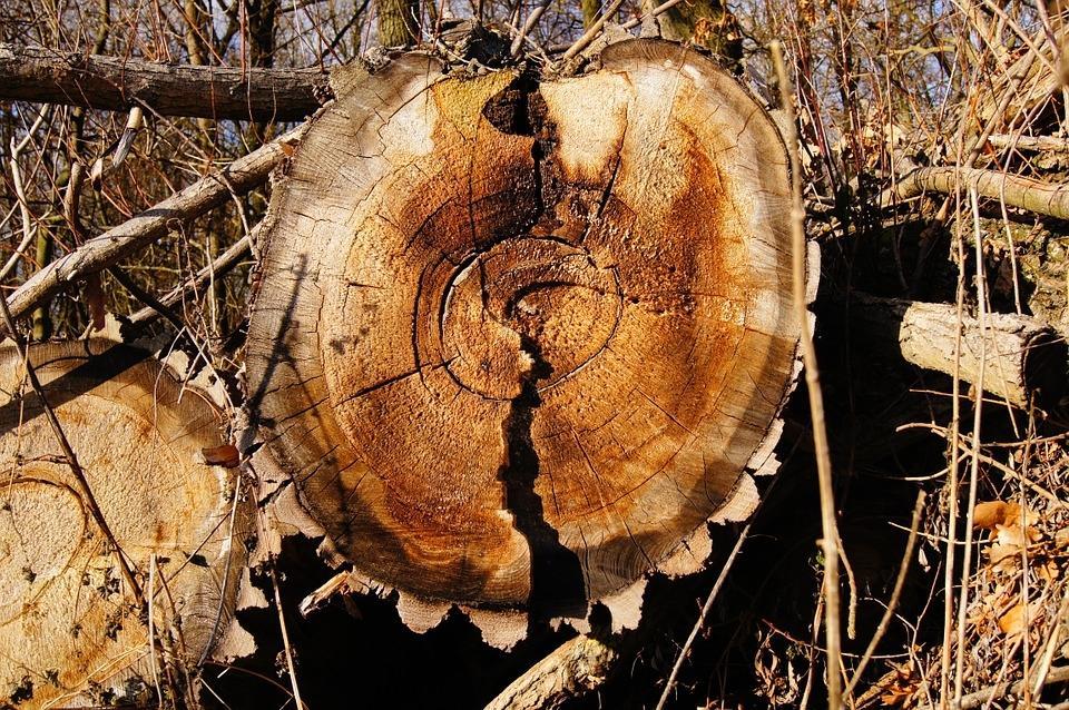 Odkup lesa, odkup hlodovine, sečnja gozda, cena lesa Zasavje gallery photo no.0